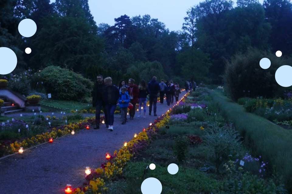 Noc Muzeów 2019 w Ogrodzie Botanicznym